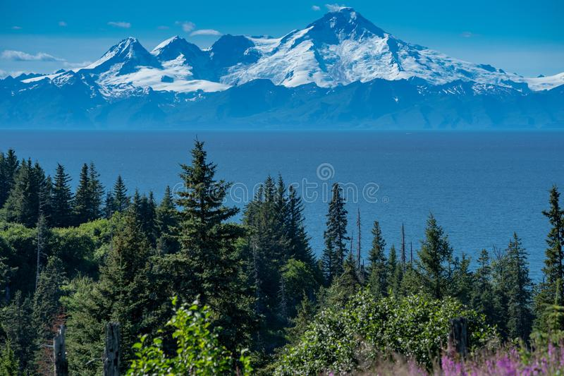 Clear view of Mount Redoubt from Anchor Point Alaska on a sunny day. Fireweed and trees in the foreground royalty free stock photos