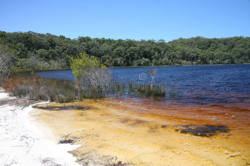 Clear water in freshwater lake, Australia, Fraser Island. The Clear water in freshwater lake, Australia, Fraser Island royalty free stock photography