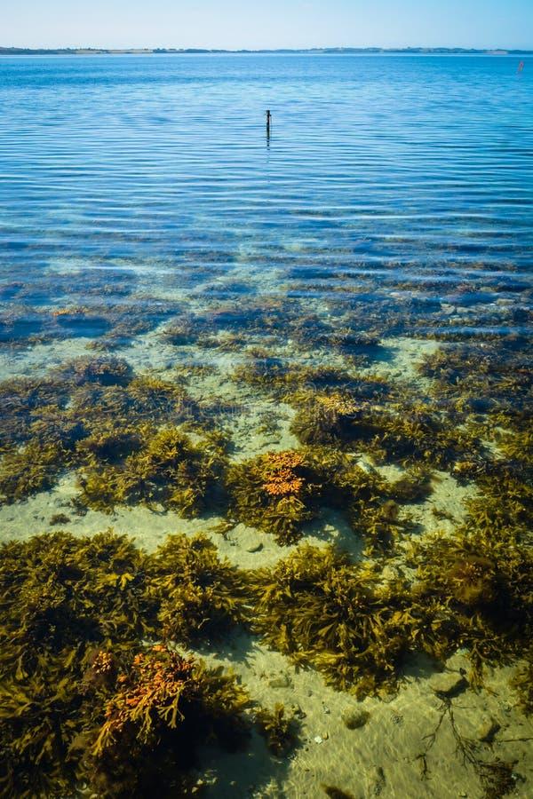Clear waters, Aarhus Bay, Denmark royalty free stock photos