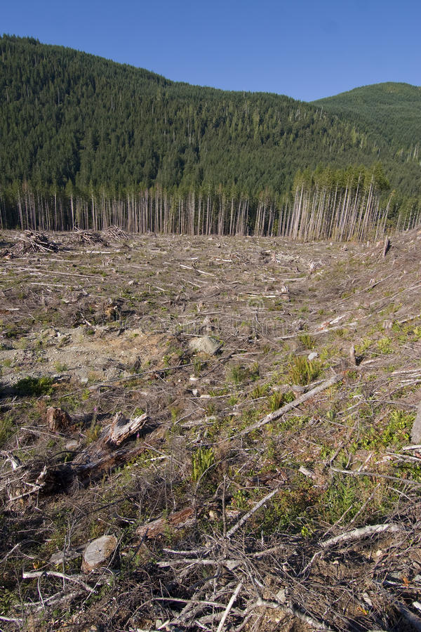 Clearcut. Forestry in British Columbia Canada stock image