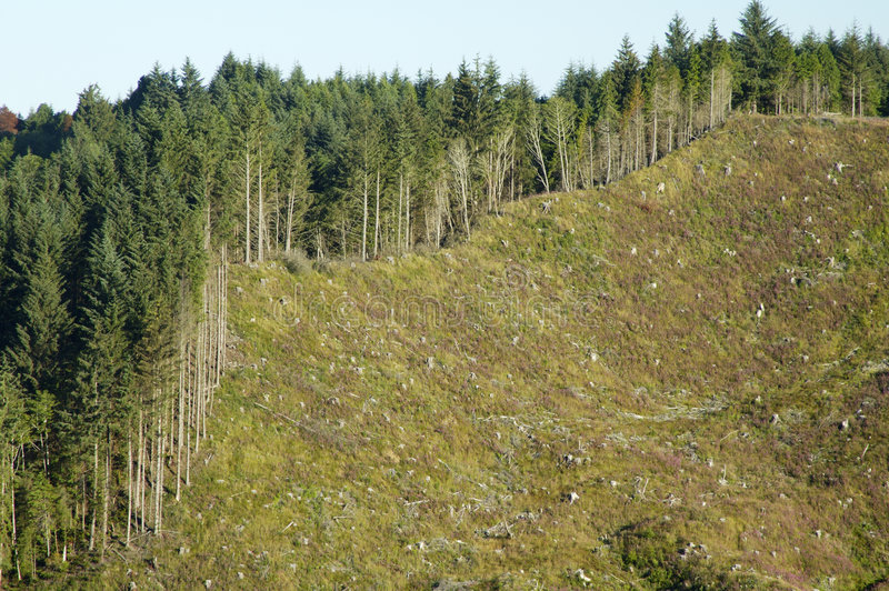 Clearcut 3. Clearcut area on a mountainside along the Pacific coast stock images