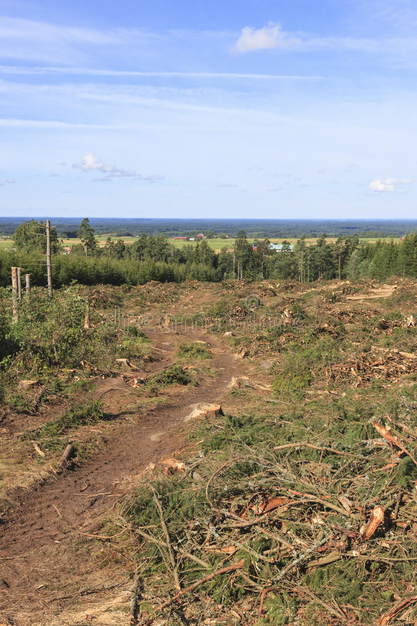 Clearcut area. In the forest royalty free stock photography