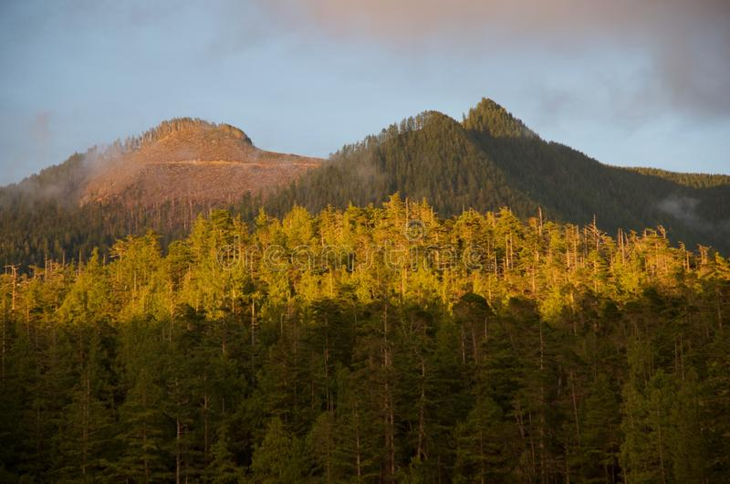 Clearcut area on mountain top seen through fog in evening, Nuchatlitz Provincial Park. Clearcut area on mountain top seen through fog in evening light in stock photography