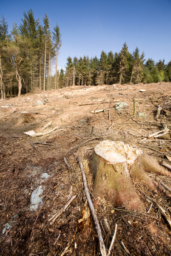 Clearcut Block. A forest with the trees cut down stock image