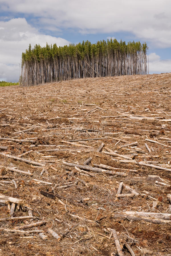 Clearcut forest. An island of trees are all that remain from a clearcut section of forest stock photography