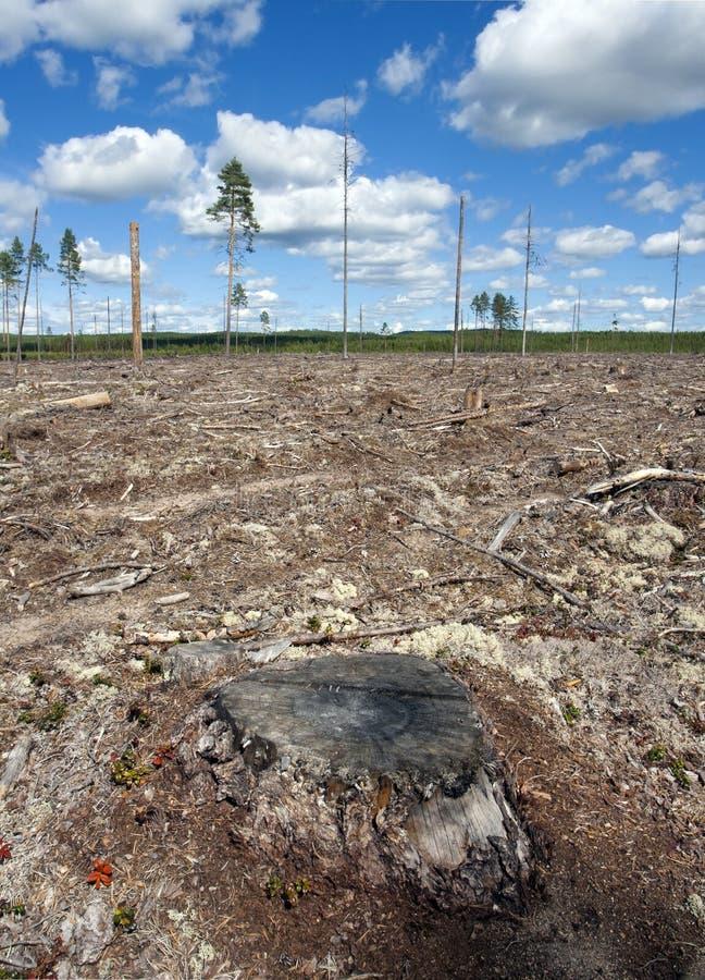 Clearcut las w Szwecja obrazy royalty free