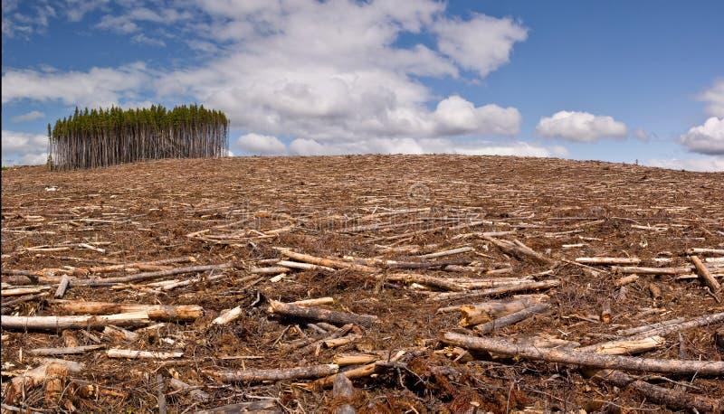Clearcut logging stock photo