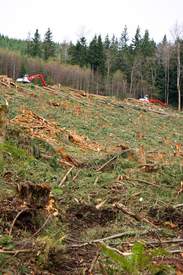 Clearcut Logging In Pacific Northwest. A debris pile is in the foreground with two log loaders up on the hill royalty free stock photos
