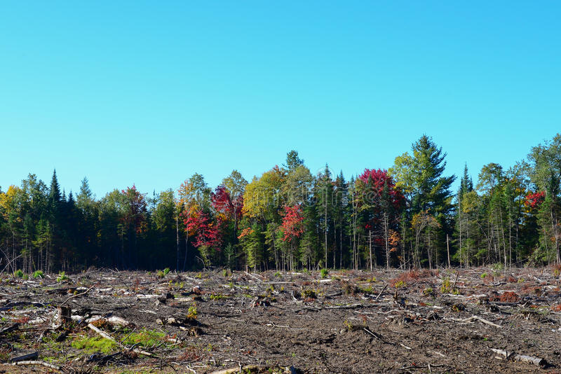 Clearcut logging. Results of clearcut logging on forest stock images