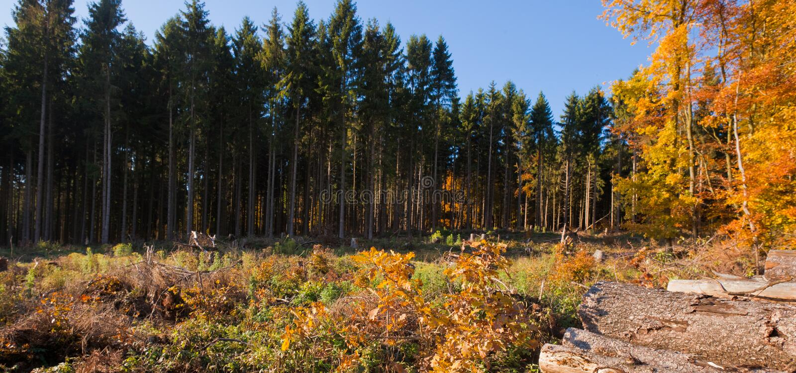 Clearcut Timber and Logpile. Renewable resource forest: clearcut timber and pile of logs stock photos