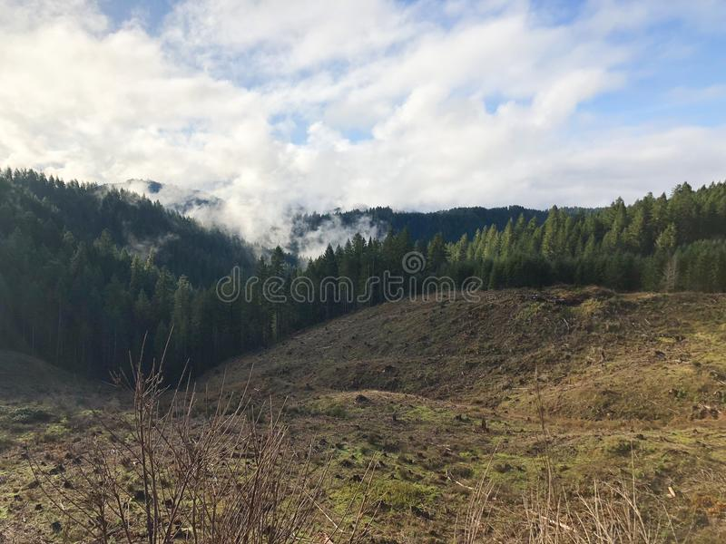 Clearcut at Treefarm in Oregon. Clearcut hillside with tall timber and reprod on one side in a tree farm in Oregon stock photo