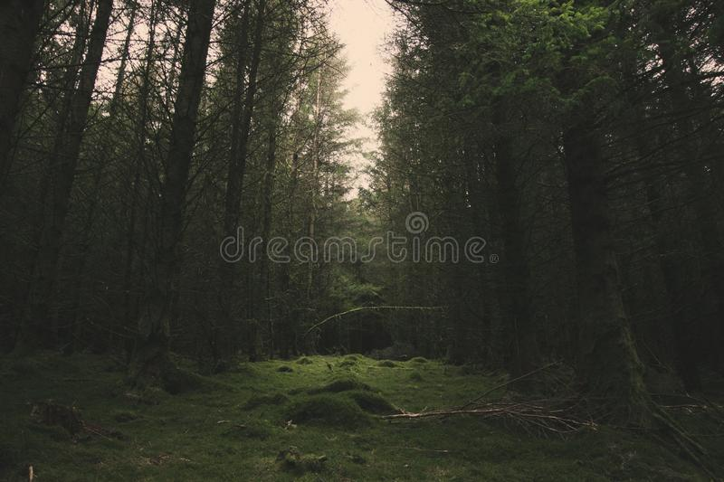Clearing. A clearing in a forest, mossy green floor and light coming through stock photos