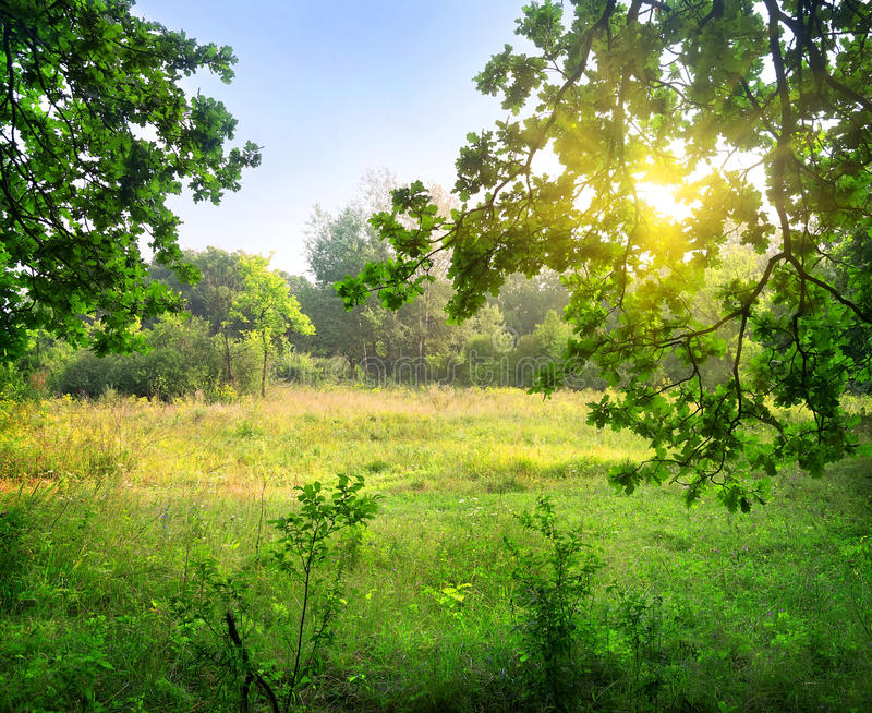 Download Clearing in the forest stock photo. Image of clearing - 32991812