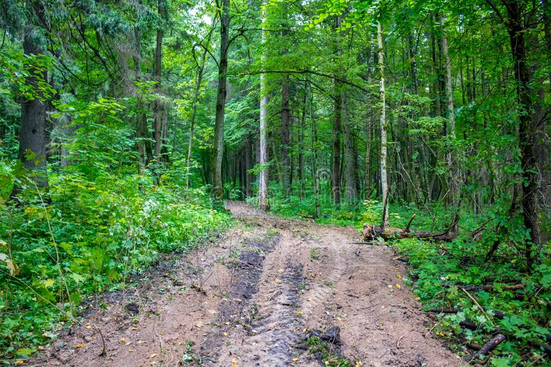 A clearing through a mixed forest. In summer stock image