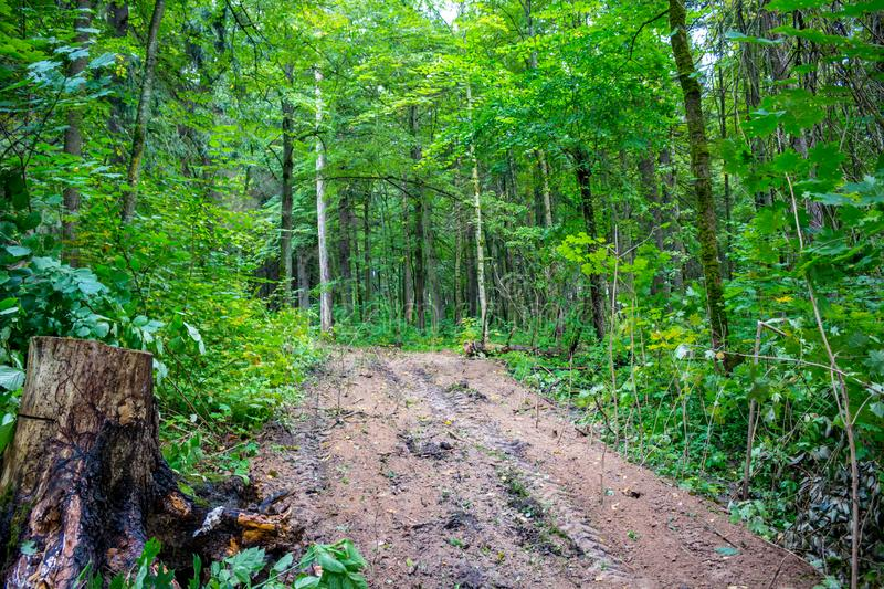 A clearing through a mixed forest. In summer royalty free stock image
