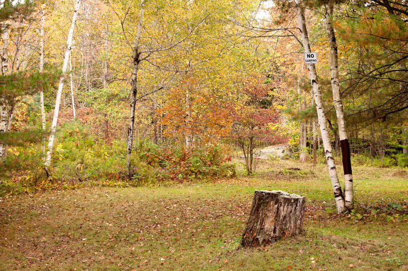Download Clearing In The Woods With No Camping Sign Stock Photo - Image of ontario, grass: 21460088