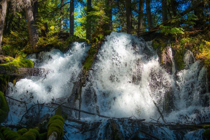 Clearwater baja bosque del Estado de Umpqua foto de archivo libre de regalías