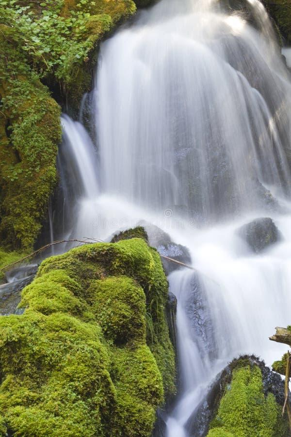 Clearwater baja las rocas cubiertas de musgo de las exhibiciones y las cascadas sedosas foto de archivo