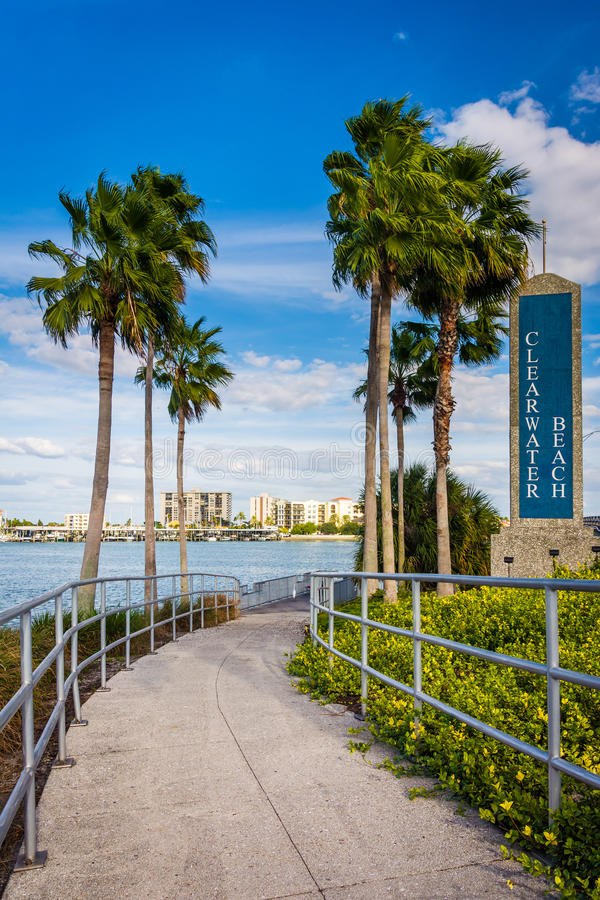 Clearwater Beach sign and palm trees along a path in Clearwater. Beach, Florida royalty free stock photo