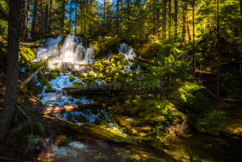 Clearwater Falls Umpqua National Forest. Clearwater Falls Douglas County, Oregon stock photography