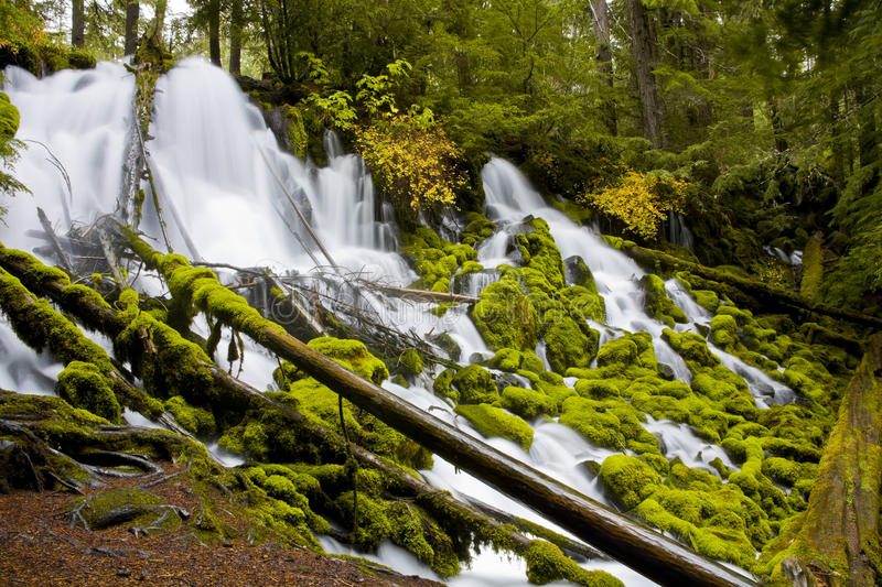 Clearwater Falls - Umpqua Scenic Byway stock photography