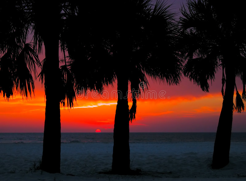 Download Clearwatersolnedgång arkivfoto. Bild av seashores, trees - 507114