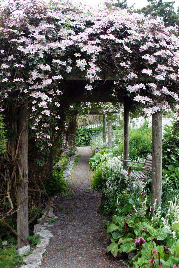 Free Clematis Covered Path Stock Photo - 11003050