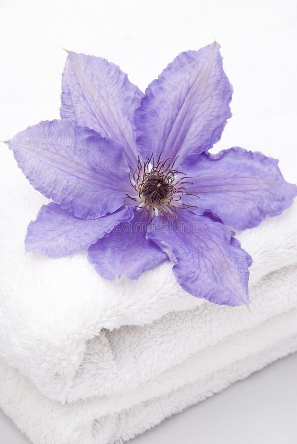 Clematis en una toalla imágenes de archivo libres de regalías