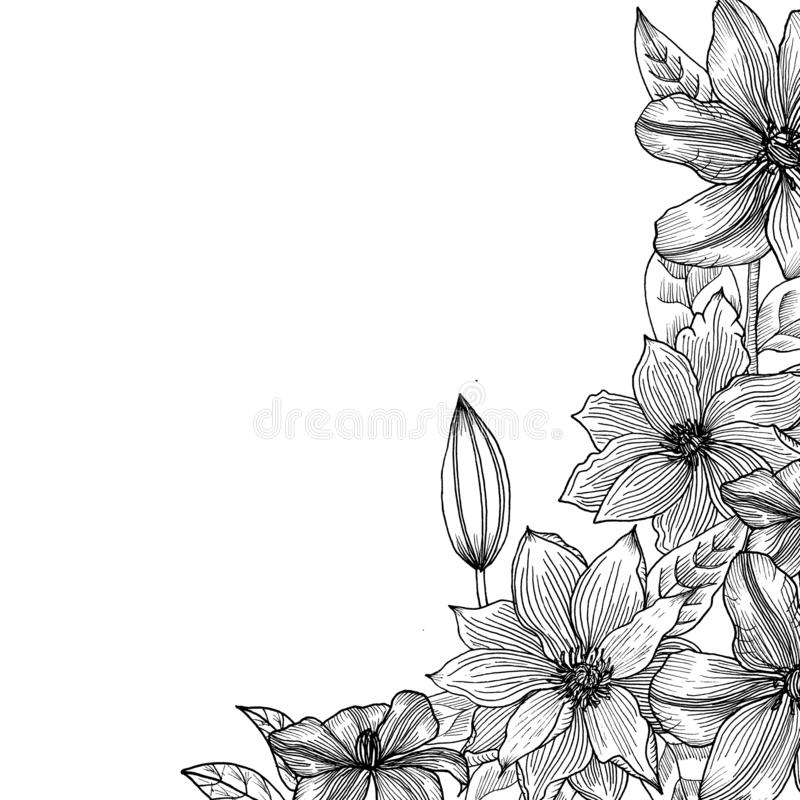 Clematis Mão desenhada gráficos ilustração stock