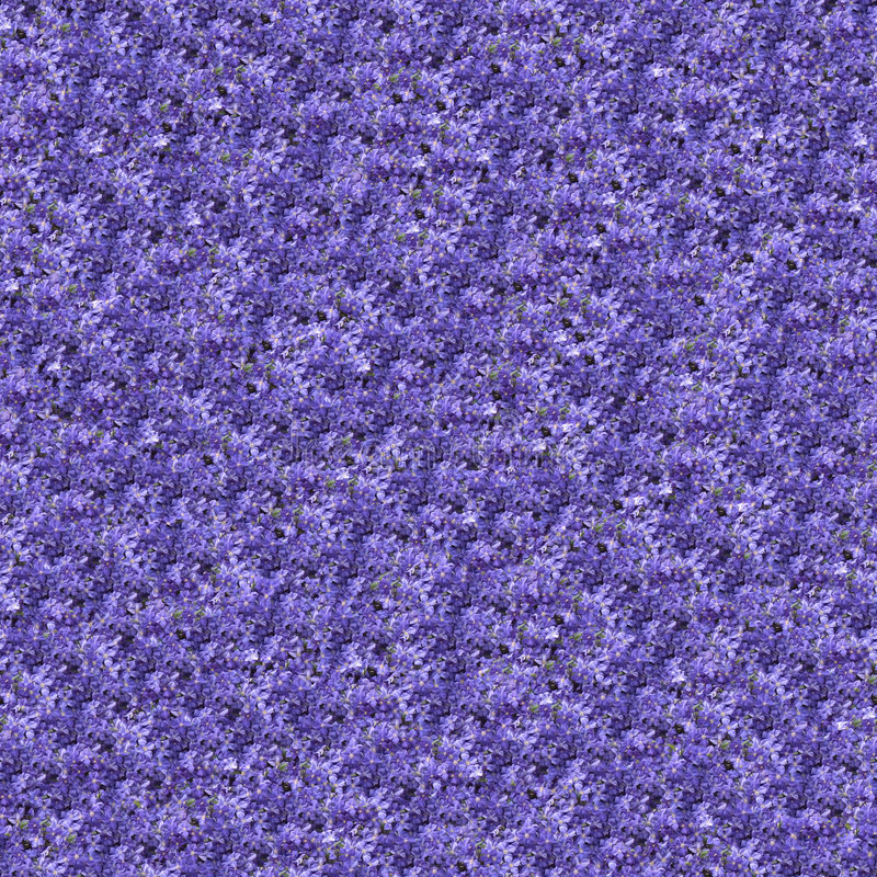 Download Clematis Seamlessly Composable Pattern Royalty Free Stock Images - Image: 7744039