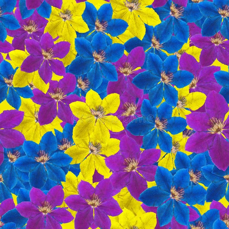 Clematis Textura sem emenda do teste padrão das flores Fundo floral ilustração do vetor