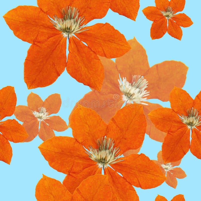 Clematis Textura sem emenda do teste padrão das flores Fundo floral ilustração royalty free