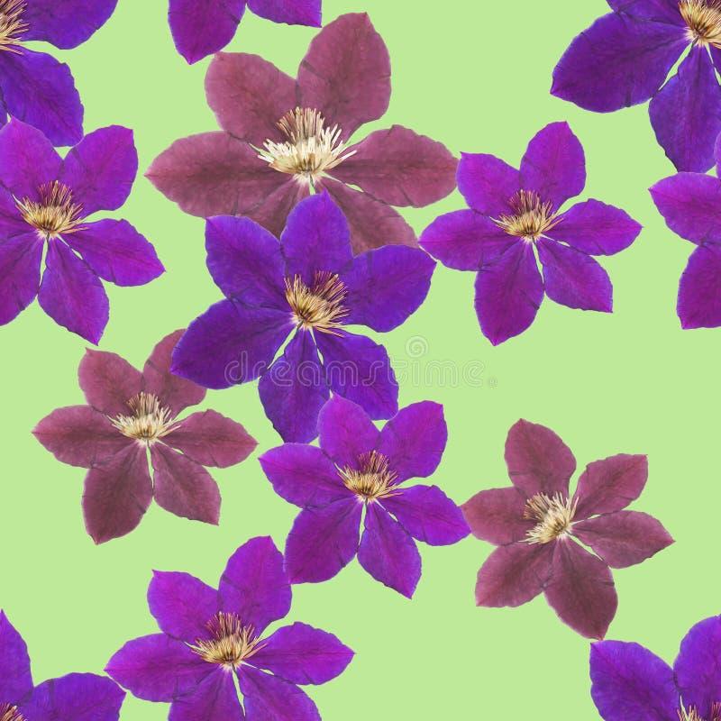 Clematis Textura sem emenda do teste padrão das flores Fundo floral ilustração stock