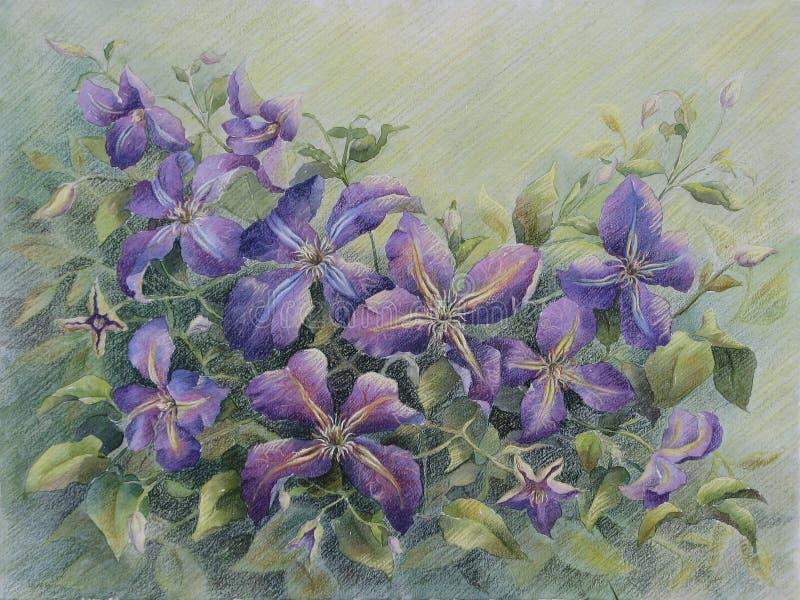 Clematis violeta ilustração royalty free