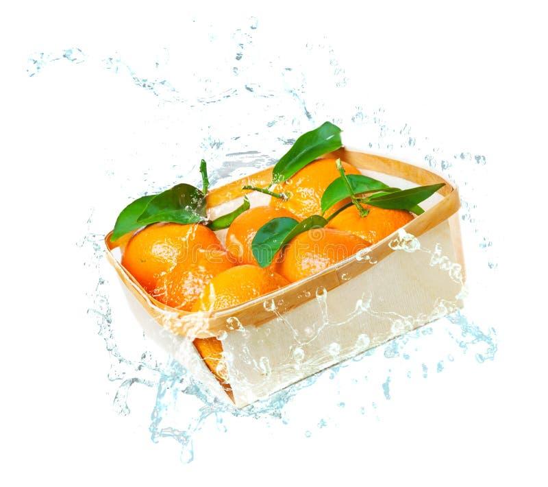 Clementinas de la hoja de la caída en cesta en el agua, chapoteo del agua foto de archivo