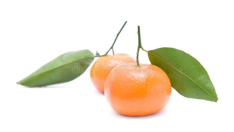 clementine royaltyfri bild