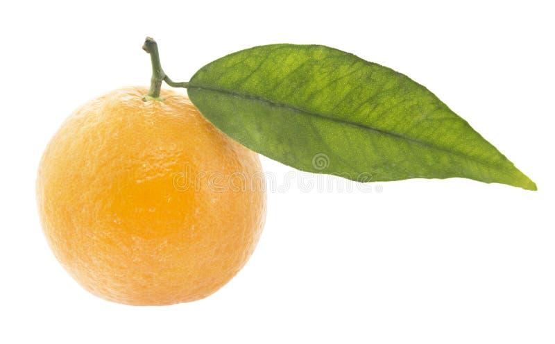 Clementine arkivbilder