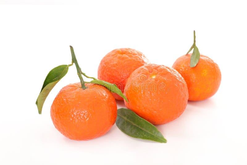 clementine стоковая фотография rf