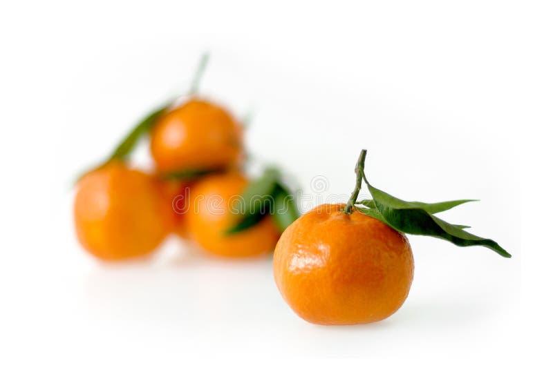 Clementine Fruit con le foglie fotografie stock libere da diritti