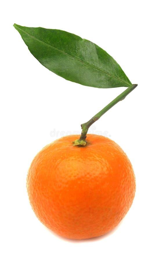 Free Clementine Mandarin Orange Perfect Royalty Free Stock Photos - 12363768