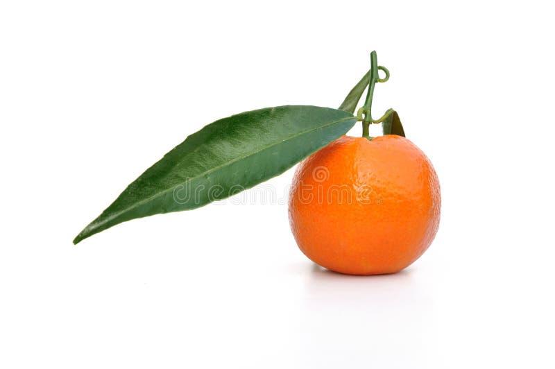Clementine met blad stock foto's