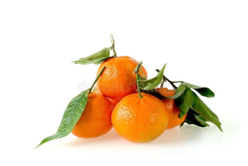 Clementine owoc z liśćmi fotografia royalty free