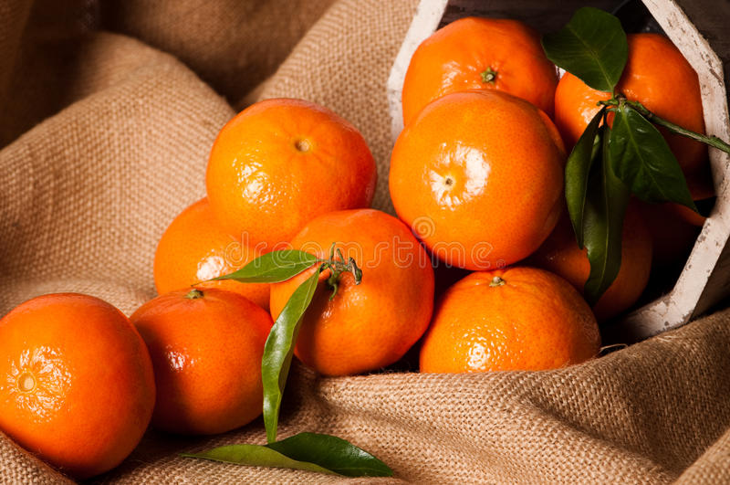 Clementine Still Life royalty free stock photos
