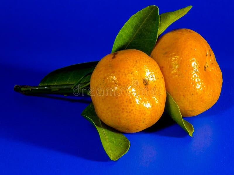 Clementine tangerin, frukt, citrus arkivbilder