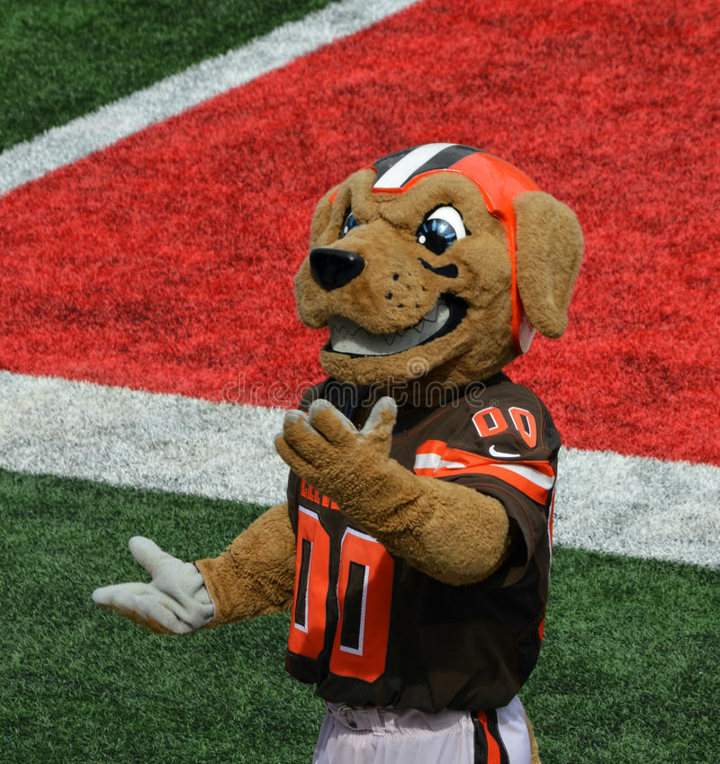 The Cleveland Browns NFL Mascot Chomps Action Image. NFL Cleveland Browns Mascot, Chomps, makes an appearance at the 2016 Orange and Brown Scrimmage held at Ohio royalty free stock photo