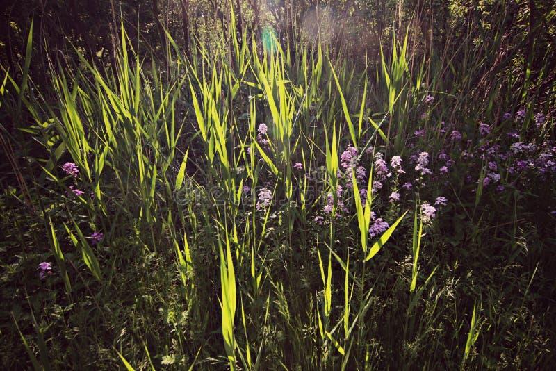 Cleveland Lakefront Nature Preserve royaltyfria bilder
