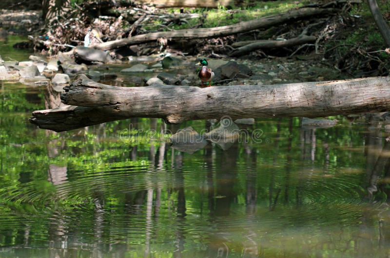 Cleveland Metroparks stock afbeelding