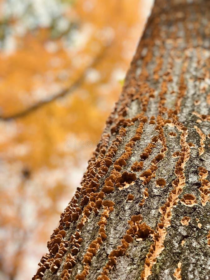 Cleveland MetroParks de Parme sont remplis de croissance de champignon vibrante - PARME - OHIO photographie stock