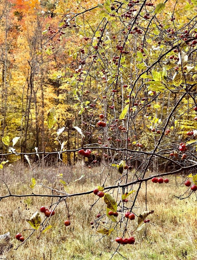Cleveland MetroParks de Parme sont remplis de croissance de champignon vibrante - PARME - OHIO images stock
