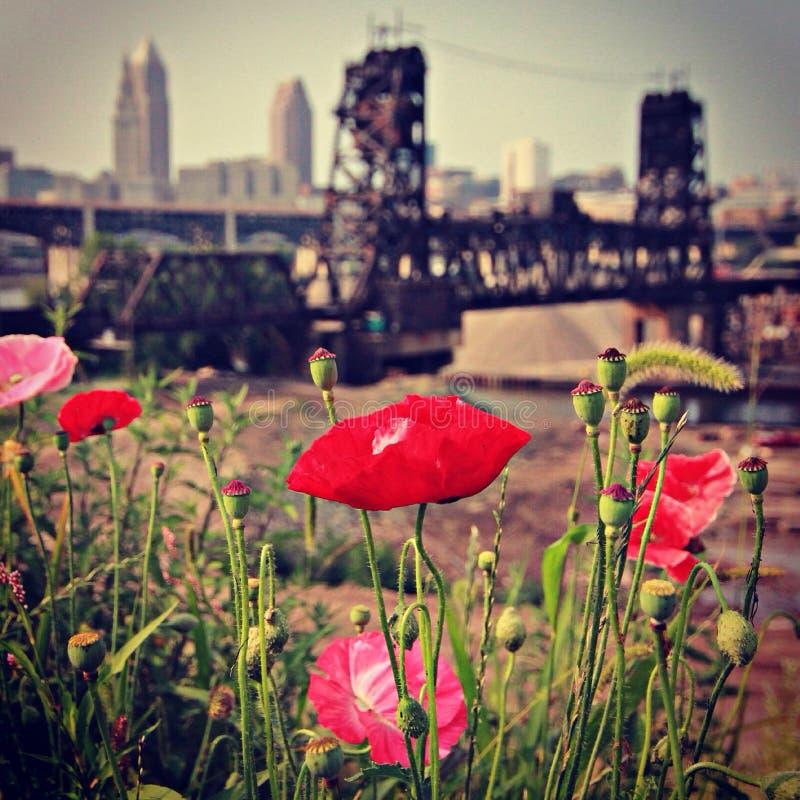 Cleveland Ohio avec des fleurs photo stock